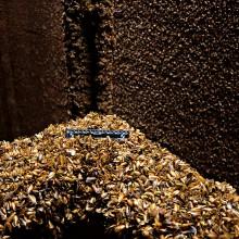 Mexilhões-dourados incrustrados no interior de uma usina hidrelétrica