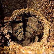 Escada no interior de uma usina tomada por mexilhões-dourados