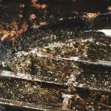 Avaliação do grau de incrustação de mexilhão-dourado em estruturas hidráulicas de usinas hidrelétricas